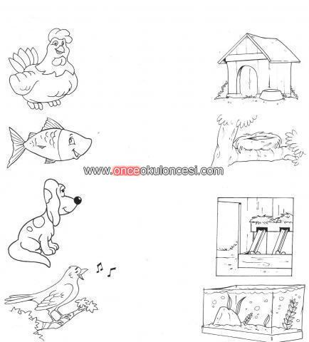 Hayvanlarin Yaşadiklari Yerler Siralama Kartlari