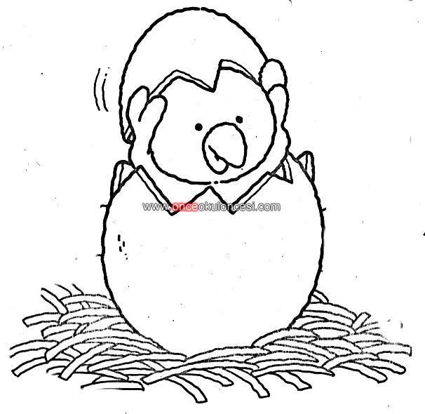 Tavuklara Yem Atan Cocuk Resmi Kumes Resmi
