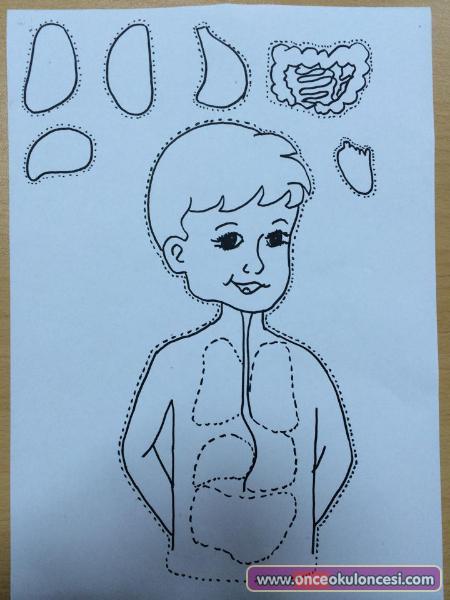 Vücudumuz Ve Organlarımız Kalıplı