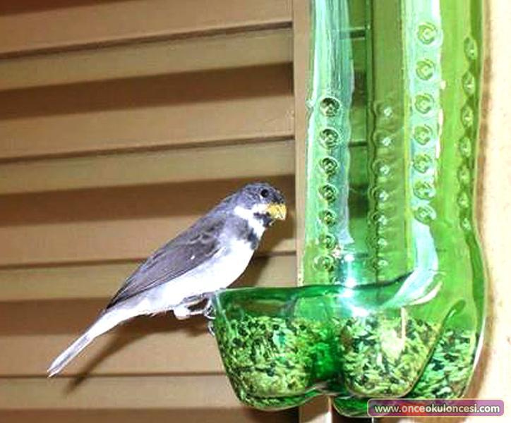 bird-feed_(1).jpg