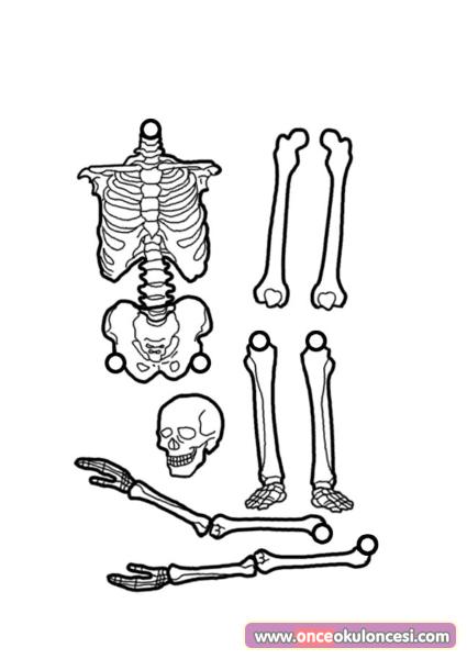 Iskelet Kaliplari